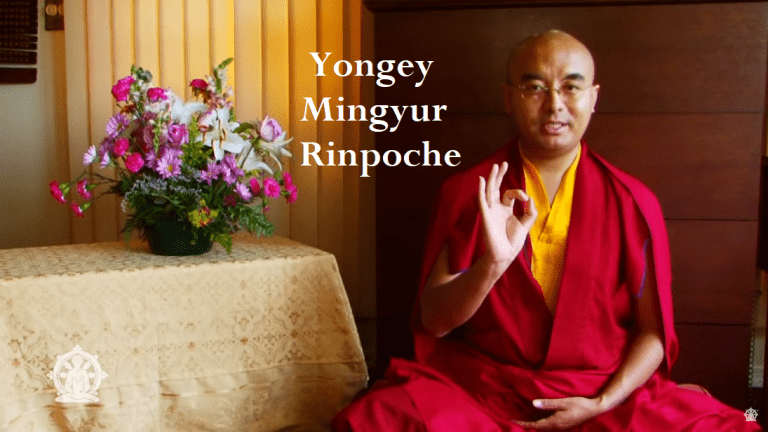 Video Of The Day 28 [Yongey Mingyur Rinpoche]